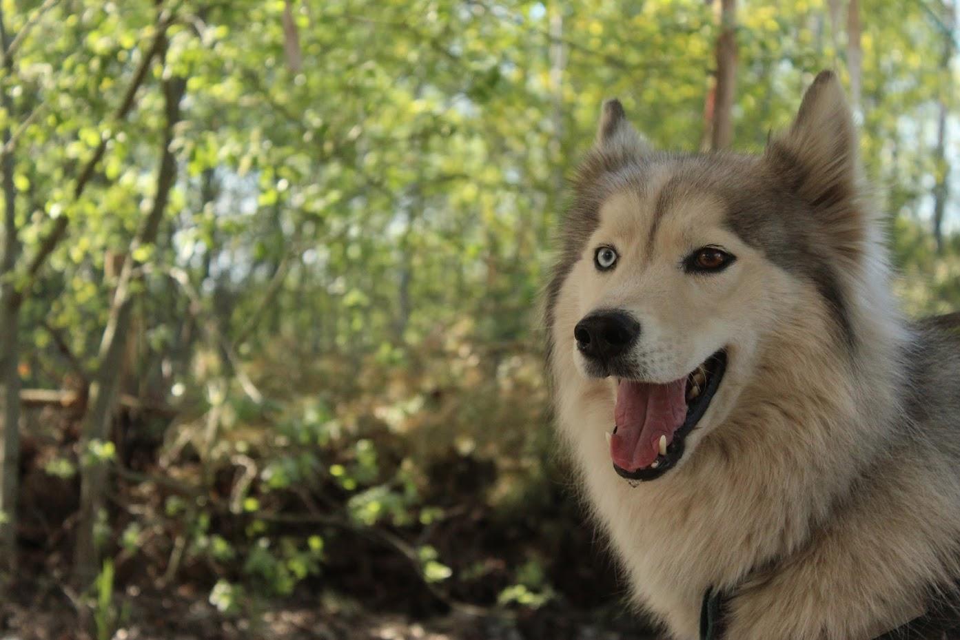huskeycamp-lausitz-hund-froehlich.jpg