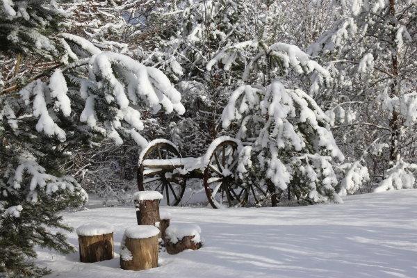 huskycamp-lausitz-winter-baeume